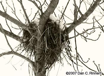 Birds Nest 163