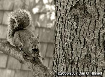 Squirrel 072
