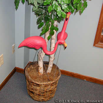 Flamingos 1660