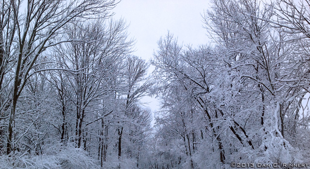 Trees Along the Road in Winter 0099